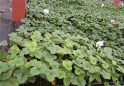 Жигулевские саженцы, питомник растений