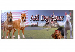 Asti Dog House, питомник