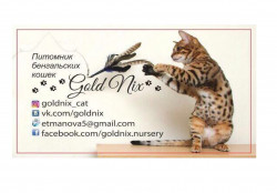 Goldnix, питомник кошек
