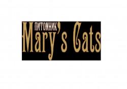 Mary`s Cats, питомник кунов и шотландских вислоухих