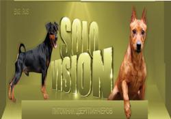 Solo Vision, питомник цвергпинчеров