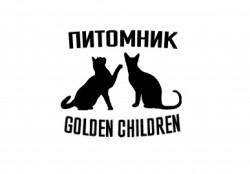 Golden Children, ПИТОМНИК ШОТЛАНДСКИХ И БУРМАНСКИХ КОШЕК