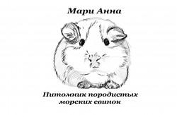 "Питомник морских свинок ""Мари Анна"""