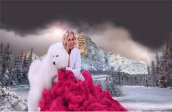 Арктическая Сказка, питомник самоедов