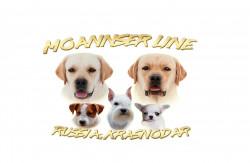 Moannser Line, питомник лабрадоров