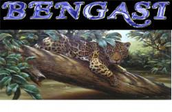BENGASI,  монопородный питомник  бенгальских кошек