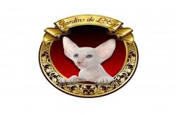 Jardins de L'Est, питомник восточных кошек