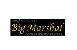 Big Marshal, питомник бенгальских кошек