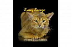 Sunny-savage, питомник абиссинских кошек