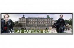 Volaf Castle's , питомник Афганов