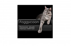 Foggycoon, питомник мейн-кунов