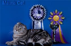 Mauris Cat, питомник британских и шотландских кошек рисунчатых окрасов