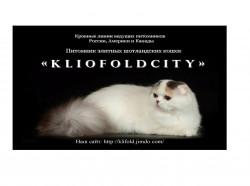 Kliofoldcity cattery