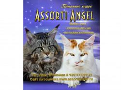 ASSORTI ANGEL, питомник кошек