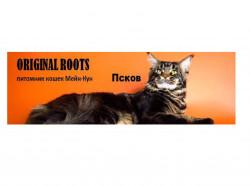 ORIGINAL ROOTS, питомник кошек Мейн-Кун