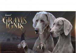 Гравис Игнис, племенной питомник легавых собак
