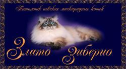 Злато Зиберио, питомник невских маскарадных кошек