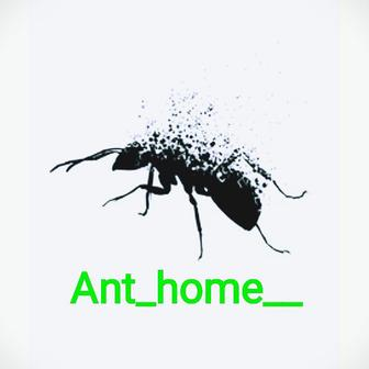 Ant_home__